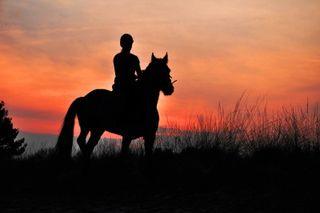 8716088_s.jpg horseback riding